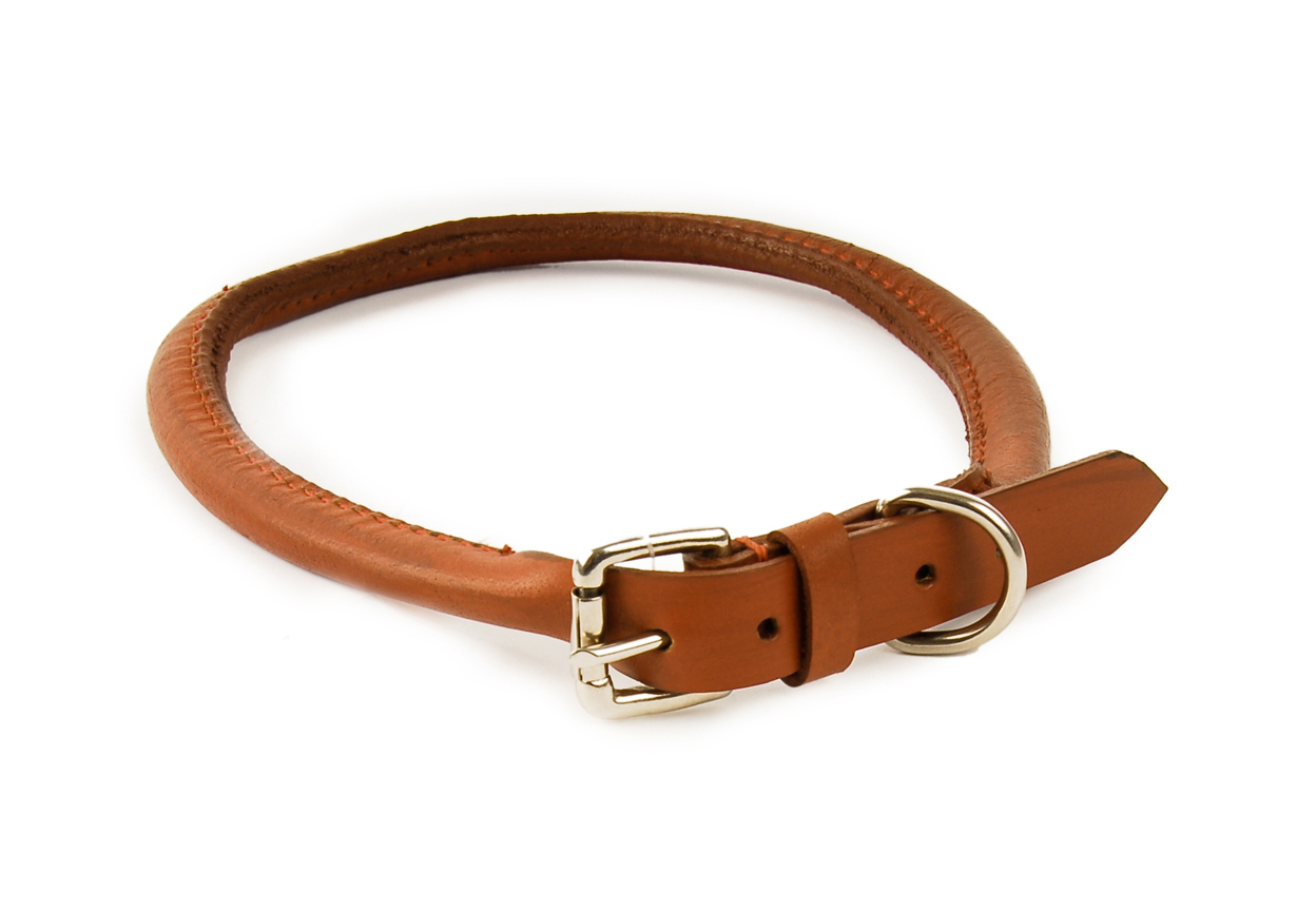 Tan Dog Collars For A Black And White Dog